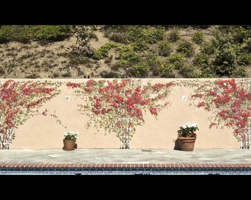 Pool Bouganvillea